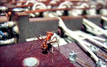 Ant_on_memory_card.jpg