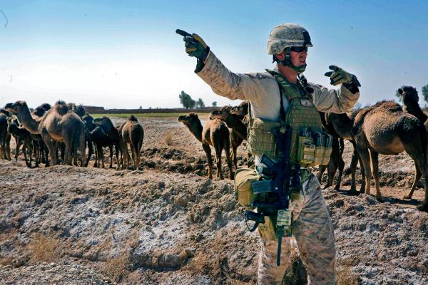 US Marine Camel.png