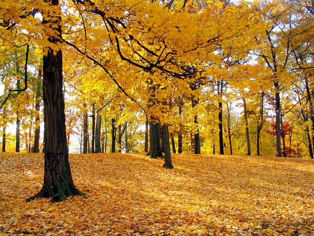 fall-leaves-2-1513503-640x480