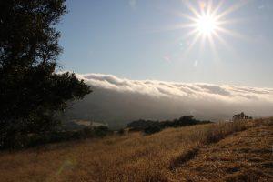 Fog pic