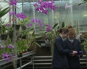 Writhlington School greenhouse.jpg