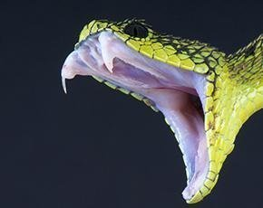 Venom is serious, but no Heartbleed, say experts