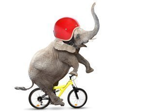 The digital CIO: Motivate the elephant