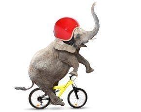 The digital CIO: Motivate the elephant
