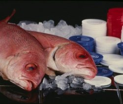 Luca Brasi sleeps with the fishes.jpg