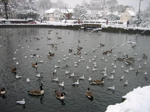 snow-ponds.jpg