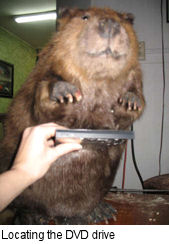 Beaver Pc1.jpg