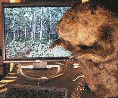 Beaver Pc2.jpg