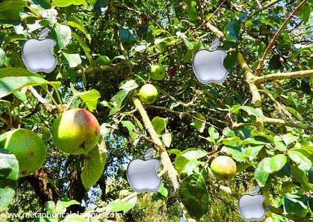 apple_tree.jpg