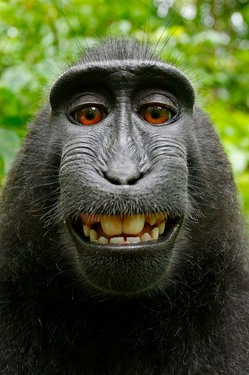 Photography Is A Monkey Business Downtime