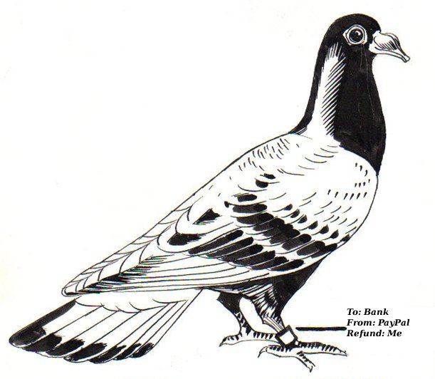 Carrier_Pigeon.jpg