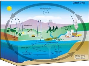 Carbon_cycle.jpg