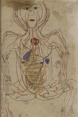 Circulatory system by C14th Persian - Mansur ibn Iiyas - 350 years b4 Europe - at-HistoryNeedsYou.png