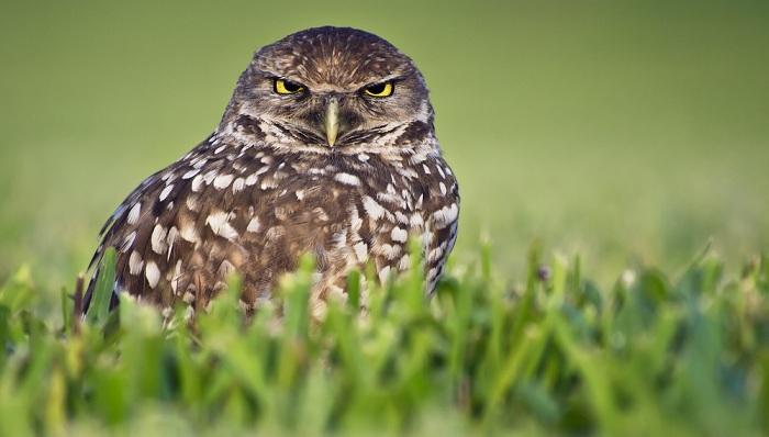Image of angry bird