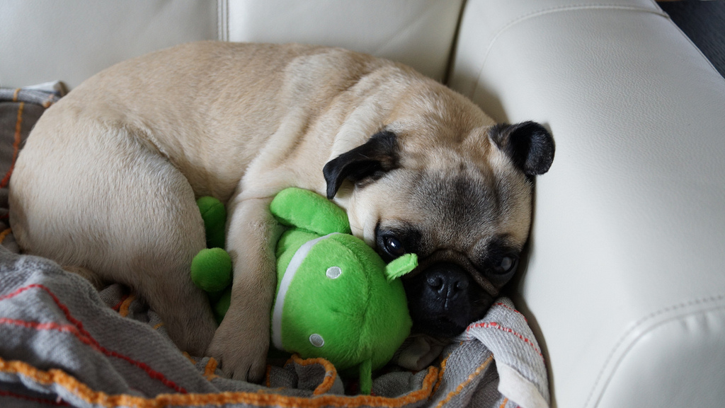 Pug holding plush Android mascot toy.
