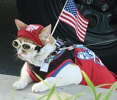 Freedom Cat