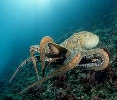 Octopus, F1 Online, Rex Features.jpg