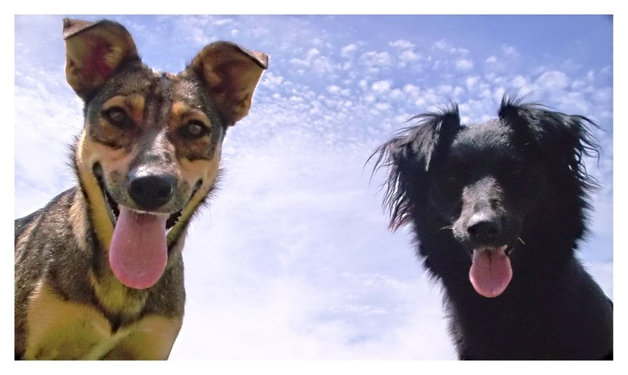 http://www.microscope.co.uk/blogs/quicke-view/dogs.jpg