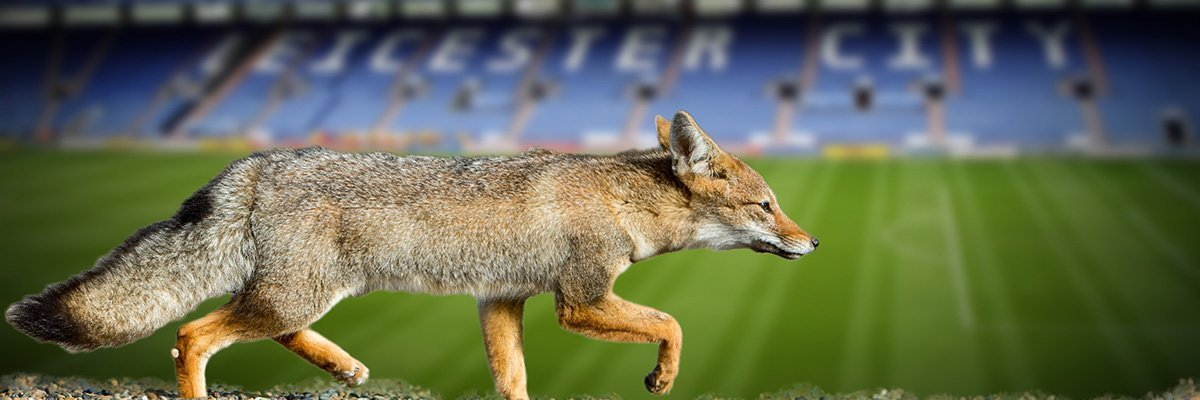 Foxy Leicester City Fc Won Premiership With Data Analytics