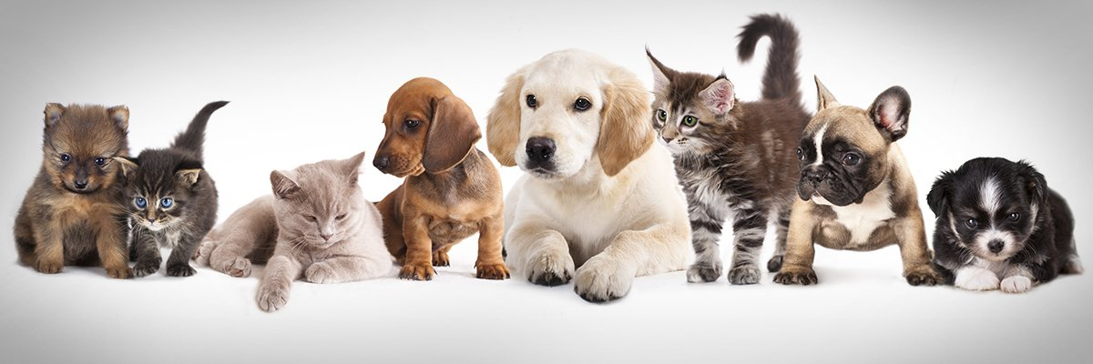 Nordic startups make advances in pet tech