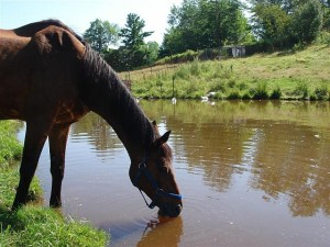 horse to water - enable sales